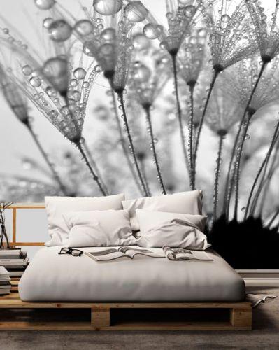 Fototapeta Krople wody na pyłkach dmuchawca - w efekcie Czarno-Białe