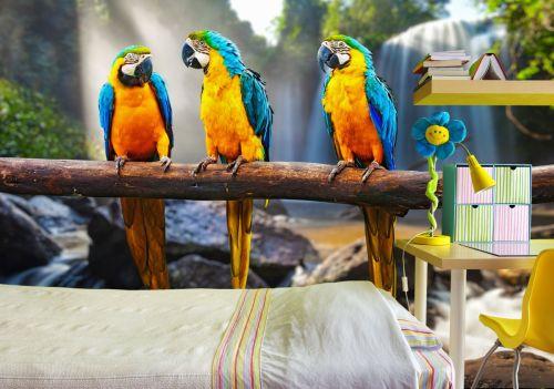 Fototapeta Papugi na gałęzi