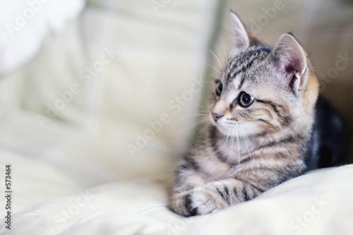 Plakat Kot Zwierzę Włos Spółka Sługa