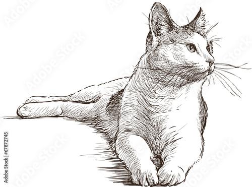 Kot-czyli przyjaciel z pazurkiem