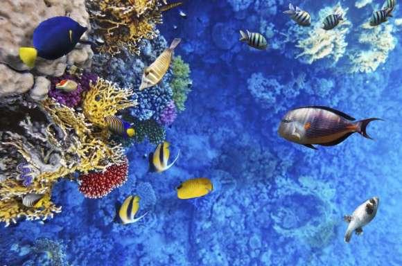 Plakat Rafa Koralowa Morze Czerwone
