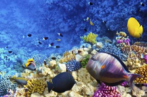 Plakat Rafa Koralowa W Morzu Czerwonym